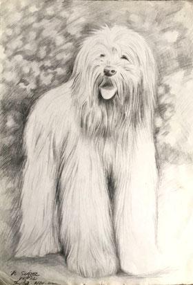 Álvaro Suárez Vértiz, pintura contemporánea, Perú, pintores peruanos, arte, dibujo, dog