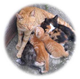 茶吉かあちゃんと子猫たち