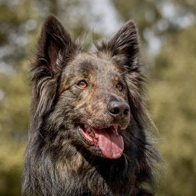 Basiscursus Hondenschool De Lijn Jany Geldof
