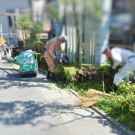 剪定 ツツジ 刈込み 植栽管理