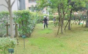 芝刈り 草刈り 機械刈り 除草 作業