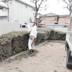 ツゲ サツキ 剪定 低木 刈込み