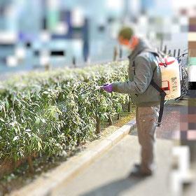 植木 消毒