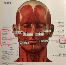 美容鍼のほうれい線対策と解説