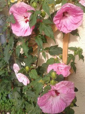 Die Pflanze ist wunderschön geworden , wir lieben sie ❤ Grüße von Zuzana&Christian aus der Uckermark
