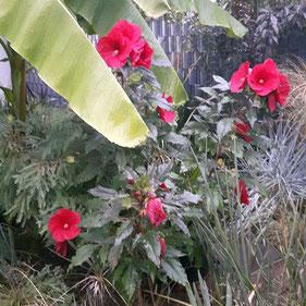 Im Garten von seinen Gastgebern bei Langen, Foto von Wouter ( Farngärtnerei von Wouter van Driel in Eelde, Niederlande)