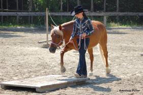 Südtirol Trail / Disziplin Trail in Hand: Pferde schonend an das Turniergeschehen heranführen. Priska Kelderer; Reiten in Kaltern am See; Reitschule; Pferde; Haflinger