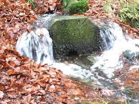 Kottelbach, Trippstadt, Quelle, Wasserläuferprojekt
