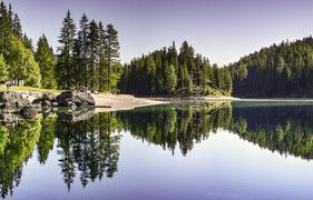 Ein Waldrand spiegelt sich im See