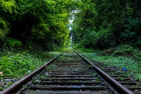 Ein überwucherter Gleis führt durch den Wald