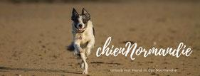 chienNormandie - Fanseite Urlaub mit Hund in der Normandie