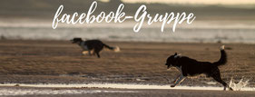 facebook Gruppe chienNormandie Urlaub mit Hund in der Normandie