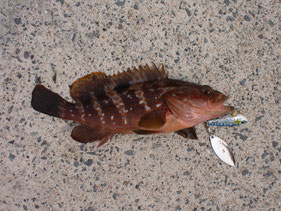 ロックフィッシュの釣り場 北九州市小倉北区・若松区