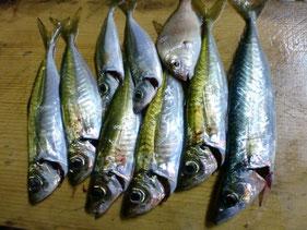 アジ・アジングの釣り場 萩市・阿武町