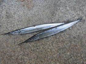 サヨリの釣り場 周南市
