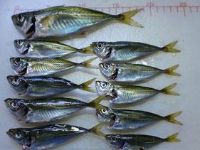 アジ・アジングの釣り場 下関市山陰・日本海側