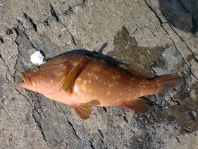 ロックフィッシュの釣り場 下関市山陰・日本海側