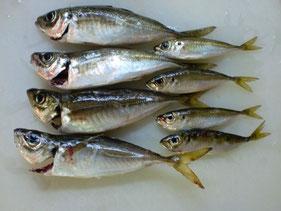 アジ・アジングの釣り場 北九州市門司区