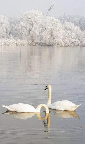 Elbe in Weiß