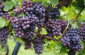 Weine aus Portugal, DOP Douro, rotwein, Horta Osório, Vinho Verde DOP, BiB, Alentejo Regionalwein