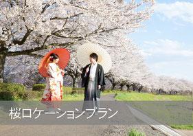 桜ロケーションプラン