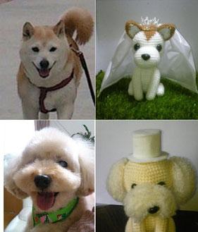 トイプー&柴犬