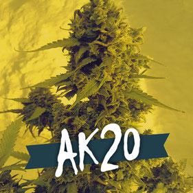 ak20 auto semillas marihuana