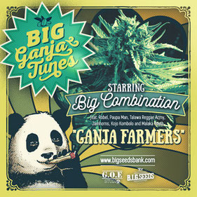 big combination ganja farmers