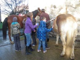 Onze paarden: Katchek en Wipsy