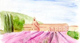 Champ de lavande devant l'abbaye de Sénanque