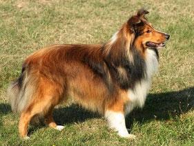 Cody of Atocha