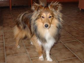 Beauty Balesco of Atocha (Cody)