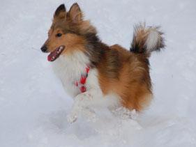 Polly of Atocha (Lassie)