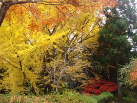 播州清水寺境内の紅葉はまさに見ごろでした