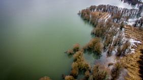Végétation partiellement ou totalement noyée lorsque le lac est remplie (fin de l'hiver 2018).