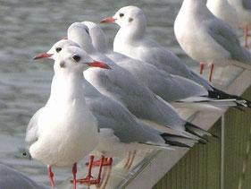 ・2004年11月2日 中央区隅田川