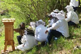 cadre ruche warré