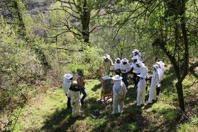 salle de formation apiculture