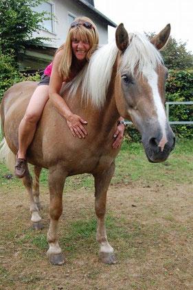 Fotovorlage Haflinger für das Pferdegemälde