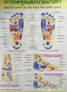 Thai Fußreflexzonen Massage - Kartographie / schematische Darstellung der Fußreflexzonen