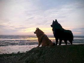 Zwei Hunde am Wattenmeer bei Sonnenuntergang