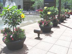 Innergreen, exterior plants, Cincinnati