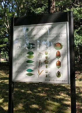 ●公園内にあった看板。ドングリも木によって形がちがうのですね
