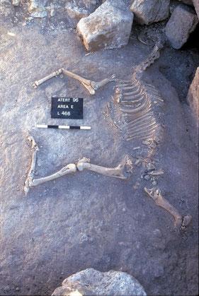 Gué Jacob - Squelette d'un cheval. Temple de Paris