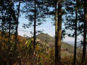 自然ふれあいの道から見た愛宕山