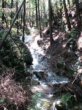 林道に入ってすぐ滝がありました。 かなりの水量です。沢向きの滝