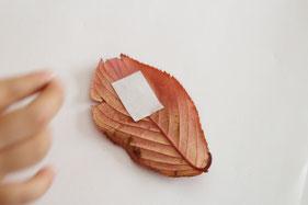 仕上げは葉の裏に両面テープを貼る