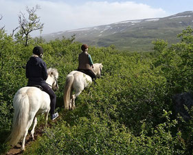 IJslandse-paarden-buitenrit-Stóra-Sandfell-IJsland.jpeg