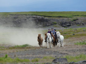 Buitenrit-IJslandse-Paarden.jpeg