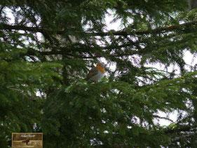 Vogel Natur Mensch Rotkehlchen